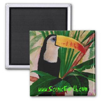Toucan Bird Exotic Jungle Amazon Wildlife Magnet