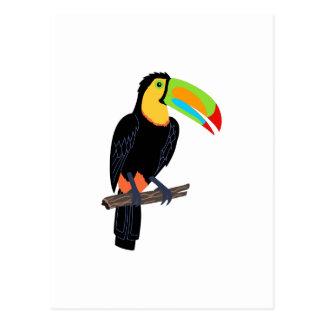 TOUCAN BIRD POSTCARD