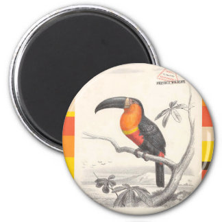 Toucan Bird Responsible Travel Art 6 Cm Round Magnet