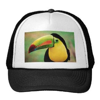 Toucan Bird Wild Nature Colorful Photography Cap