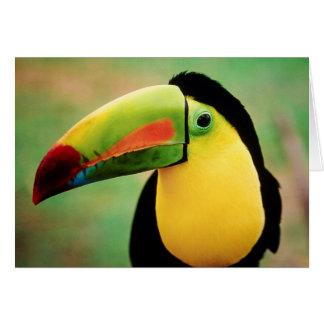 Toucan Bird Wild Nature Colorful Photography Card