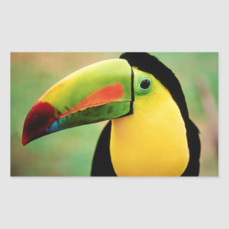 Toucan Bird Wild Nature Colorful Photography Rectangular Sticker
