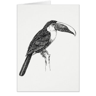 Toucan Blank Greetings Card