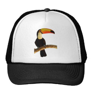 Toucan exotic bird of the Brazilian fauna Cap