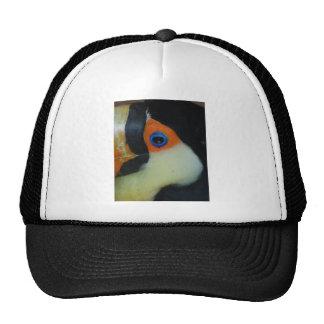 toucan eye upclose cap