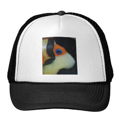 toucan eye upclose hats
