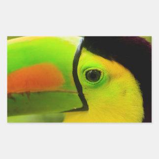 Toucan face close up, Belize Rectangular Sticker