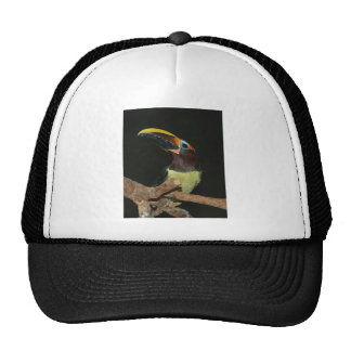 Toucan gift cap