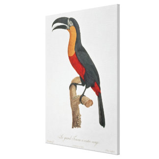 Toucan: Great Red-Bellied by Jacques Barraband Canvas Print