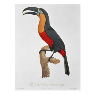 Toucan: Great Red-Bellied by Jacques Barraband Postcard