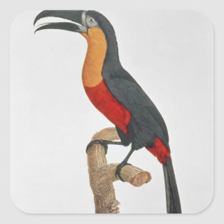 Toucan: Great Red-Bellied by Jacques Barraband Square Sticker