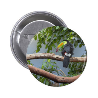 Toucan in a Tree 6 Cm Round Badge