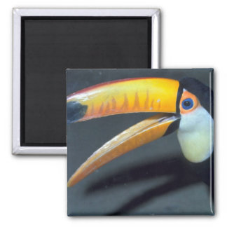 Toucan Fridge Magnets