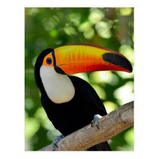 Toucan Postcard