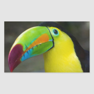 Toucan Rectangular Sticker