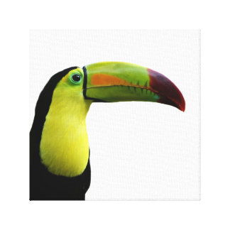 Toucan tropical exotic animal photo canvas print