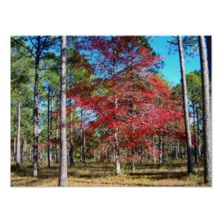 Touch of Color at Calabash North Carolina Poster