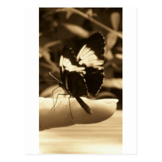 Touch of Nature - Butterfly Postcard