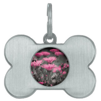 Touch of pink pet tag