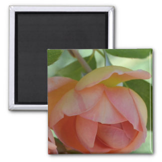 Touch of Romance Magnet