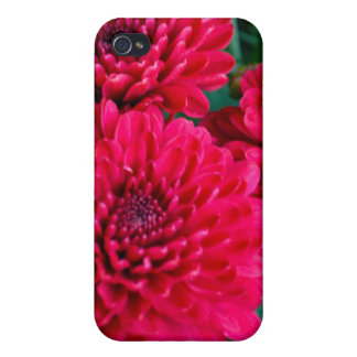 Touch of Summer Hot Pink Mums Covers For iPhone 4