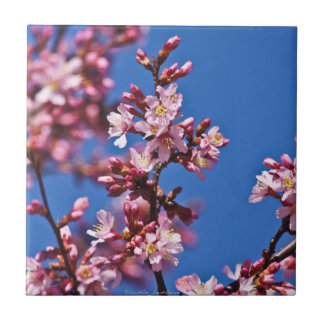 Touching Blue Japanese Cherry Blossoms Tile