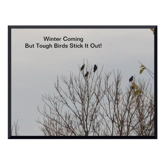 Tough Birds Stick It Out Postcard