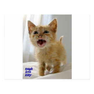 tough love kitty postcard
