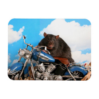Tough Rattie On Motorbike Magnet