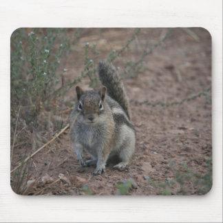 Tough Squirrel Mouse Pads