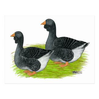 Toulouse Dewlap Geese Postcard
