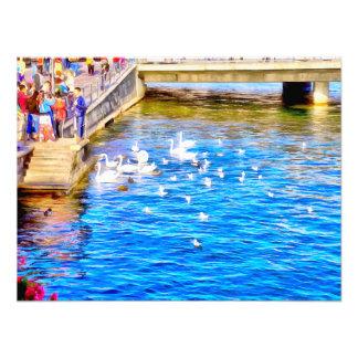 Tourists enjoying the sight of Swans Photographic Print