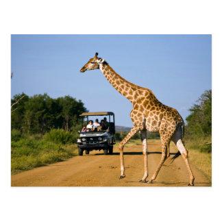 Tourists Watching Giraffe Postcard