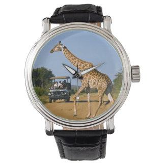 Tourists Watching Giraffe Watch