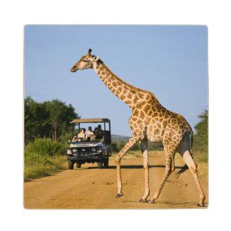 Tourists Watching Giraffe Wood Coaster