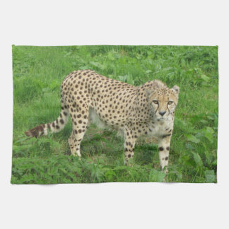 Towel - cheetah