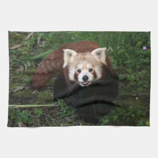 Towel - red panda