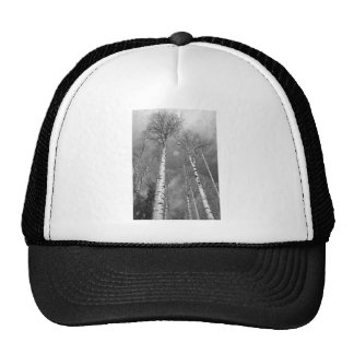 Towering Aspen Trees In Black and White Cap