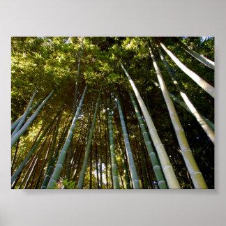 Towering Bamboos Poster