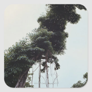Towering tree and vines in jungle square sticker
