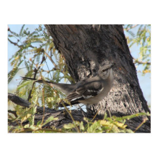 Townsend s Solitaire Postcard