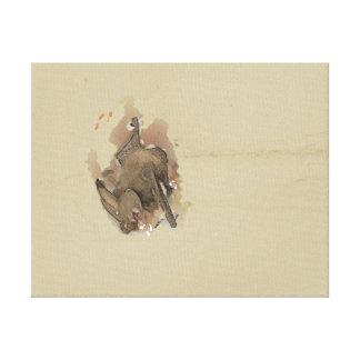 Townsend's Big-eared Bat Canvas Print