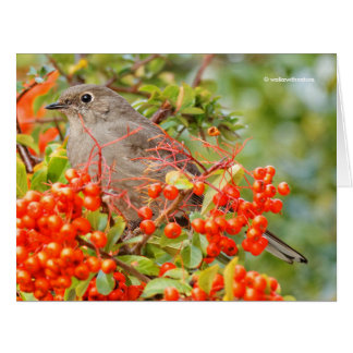 Townsend's Solitaire on the Pyracantha Big Greeting Card