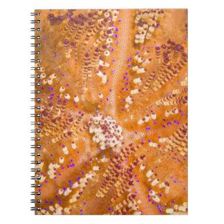 Toxic Fire Urchin (Asthenosoma varium) Notebook