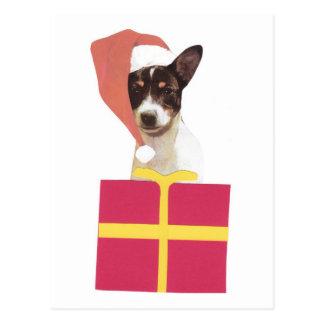 Toy Fox Terrier Santa Hat Postcard