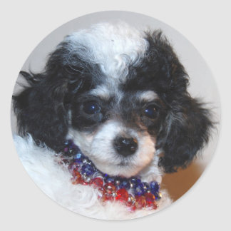 Toy Parti Poodle Puppy face Round Sticker