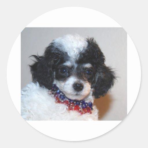 Toy Parti Poodle Puppy face Sticker