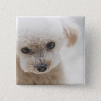 toy poodle 15 cm square badge