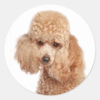 toy poodle breeds round sticker