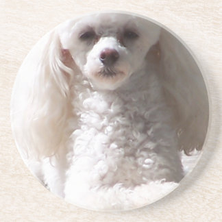 Toy Poodle Drink Coasters